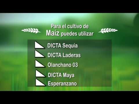 Recomendaciones Ciclo de Siembra de Primera 2015