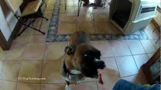 Greeting Dog Before In Home Training Lesson