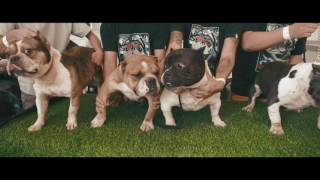 abkc s fantastic beast american bully show