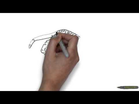 Как нарисовать тигра