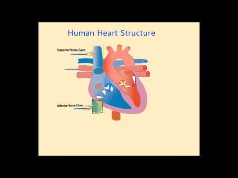 Human Heart and its Work Biology Science Taleem Ghar Tele School from YouTube · Duration:  5 minutes 41 seconds