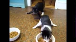 Коты после валерьянки