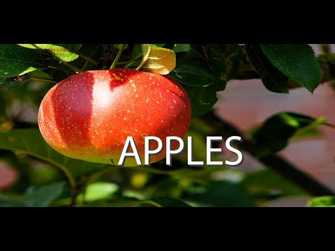 Top 10 Health And Diet Benefits Of Apples