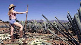 MI PRIMERA VEZ EN GUADALAJARA Y TEQUILA ✦ Vlog La Ucraniana en Jalisco