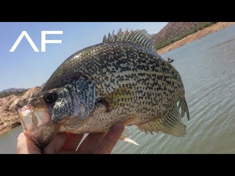 ARIZONA CRAPPIE FISHING!!!