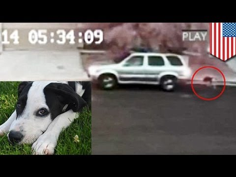 Poor puppy: heartless Nevada jerk caught on video abandoning dog