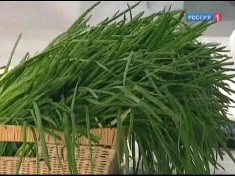 Зеленый лук - полезные и вредные свойства. Как правильно вырастить зеленый лук