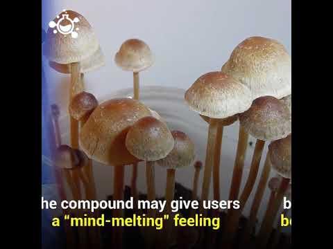 Magic Mushrooms Psilocybin Long Term Effects Youtube