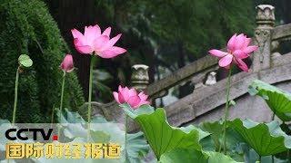 [国际财经报道]武汉荷花节:清风拂叶 粉荷争艳| CCTV财经