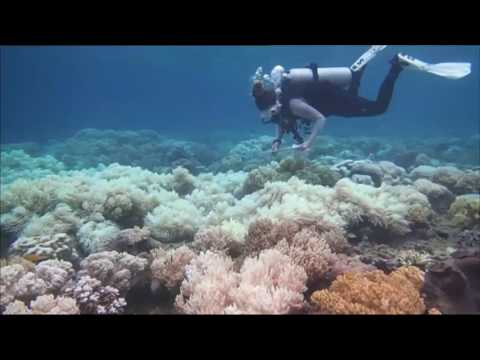 Great barrier reef bleaching the result of climate change