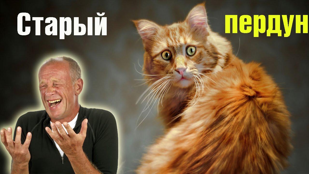 Кот который пукает и икает