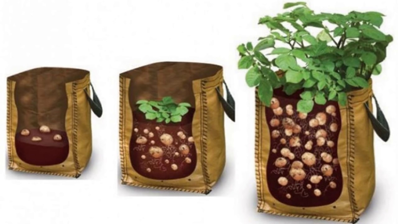 How To Grow Potatoes in A Bag - YouTube