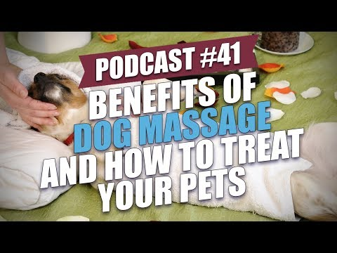 TOP #41: Benefits of Dog Massage and How to Treat Your Pets