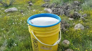 Kern river gold prospecting March 2019