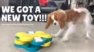 NEW DOG PUZZLE AND FRIDAY NIGHT COOKING! // Cavalier King Charles Spaniel Vlog