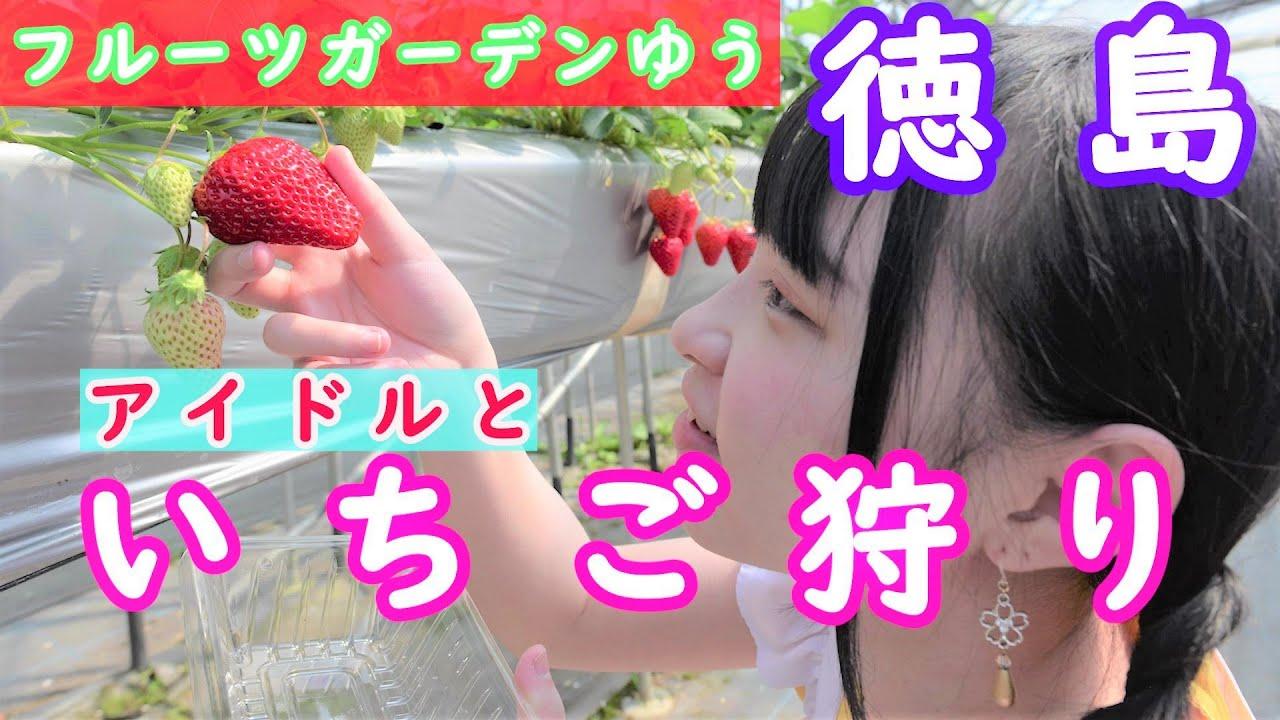徳島 いちご 狩り 徳島 果物狩り・フルーツ狩り体験比較・予約|食べ放題・品種別【アソビュー!】