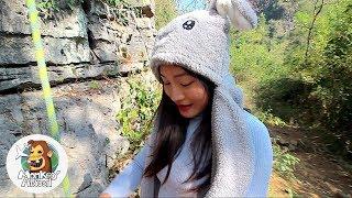 Rock Climbing Rabbit 攀岩兔子