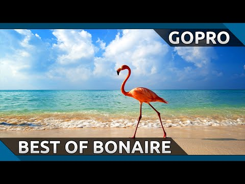 Best Of Bonaire