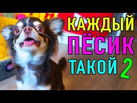 КАЖДЫЙ ПЕСИК ТАКОЙ 2 | ПАРОДИЯ Magic Pets