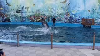 Дельфинарий Морская Звезда! Пингвинарий Лазаревское!