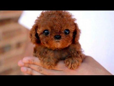 Schattige Puppies Honden Compilatie 2015 - Dog Videos 2015 - 720P