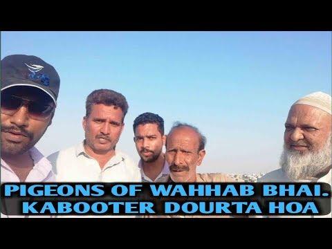 Pigeons Of  Ustad Wahhab.( Kabooter dourta hoa)