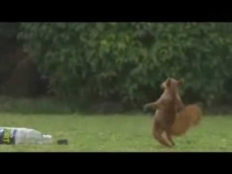 Un écureuil très Sportif ...