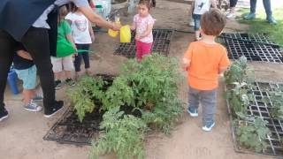 Blossom Village Toddlers Watering The Onsite Garden