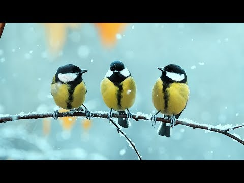 Peaceful music, Relaxing music, Instrumental Beautiful Music