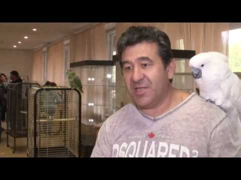 Грани. Выставка певчих птиц (26.05.2017)