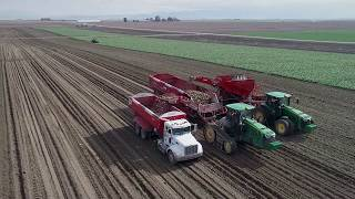 SPUDNIK Equipment 2018 - Sugar Beet Harvester / Crop Cart / Storage