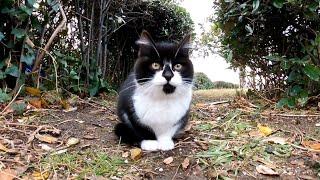 モコモコの野良子猫がカワイイ