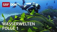 Tauchen in Indonesien, auf den Seychellen, in Grönland & der Schweiz | Wasserwelten (1/4) | SRF DOK