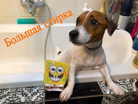 Как почистить зубы собаке, купаем джек рассела