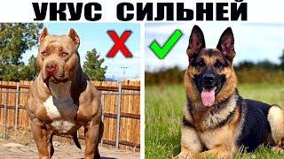 Породы собак лидирующие в различных рейтингах