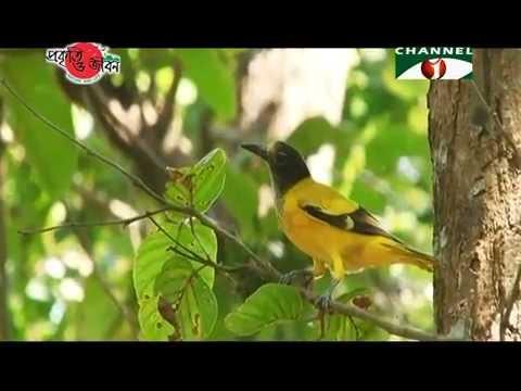 Nature and Life - Episode 166 (Parakeets of Bangladesh)