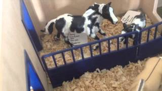 Schleich Barn tour May 2016   M Schleich(Hey everyone here is the long awaited barn tour, Hope you all enjoy! Insta - IAmASchleichLoverForever -' Snapchat - Buy my tack - stonystables1., 2016-05-03T22:30:05.000Z)