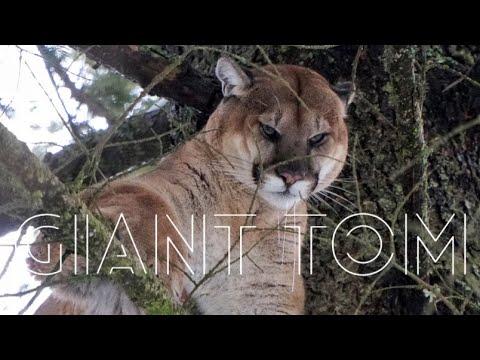 2020 MOUNTAIN LION HUNT 💥CAUTION GRAPHIC💥