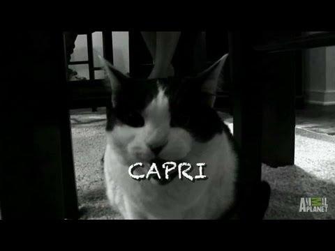 Capri's Follow-Up | My Cat From Hell