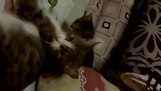 Отдам Котят В Хорошие Руки !!!