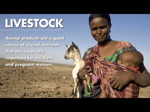 Livestock are linked to livelihoods all over the world