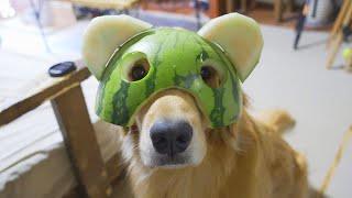 縦耳でも問題無く可愛い事を証明した愛犬