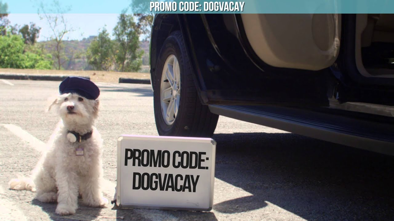 SHARE YOUR PHOTOS: Celebrate National Dog Day with your furr ...