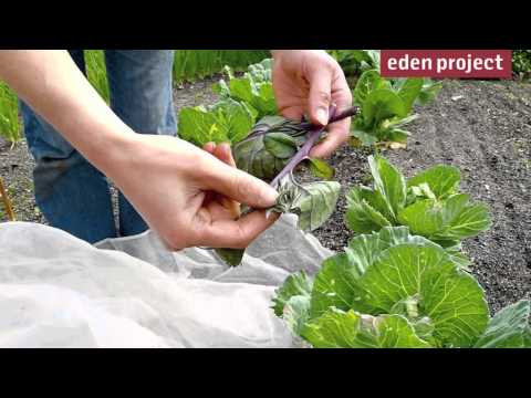 10 tips for gardeners in August from the Eden Project