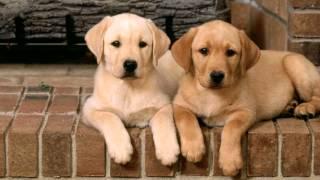 ТОП-5 самых добрых пород собак в мире