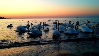 ШУМ МОРЯ -ПЕРЕЛИВЫ ВОДЫ крики ПТИЦ чайки лебеди Заснуть под звуки природы воды