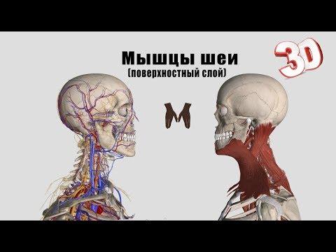 Грудино подъязычная мышца болит