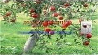 Рисованное видео. Презентация Курса Как Делать Свое Изысканное Вино(Это видео создано с помощью видеоредактора YouTube (http://www.youtube.com/editor) http://vabashkin.ru/izysk.vino.htm Рисованное видео. През..., 2015-07-11T07:32:59.000Z)