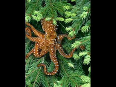 Save the Tree Octopus - YouTube