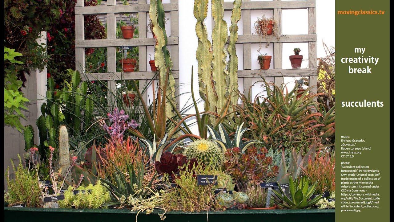 Succulents\